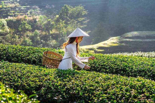 Femme asiatique portant la culture vietnamienne traditionnelle dans le champ de thé vert.