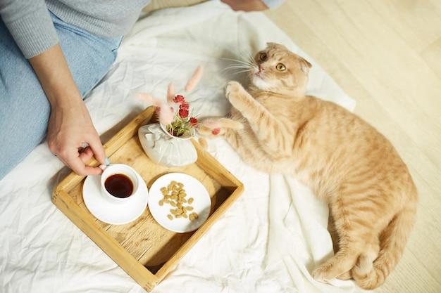 Femme assise sur le lit et buvant du café, chat se nourrissant pendant la lumière du soleil du matin, petit-déjeuner au lit. femelle avec animal domestique,