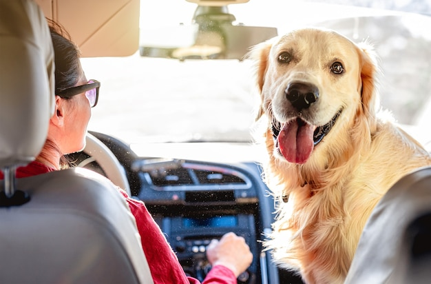 Femme au volant de voiture avec golden retriever assis sur le siège avant