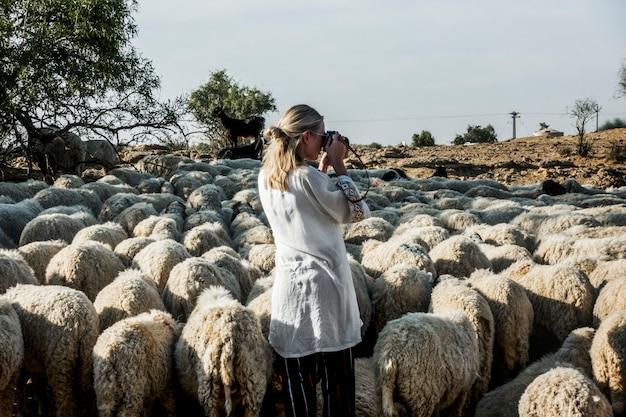 Femme blonde parmi un troupeau de moutons