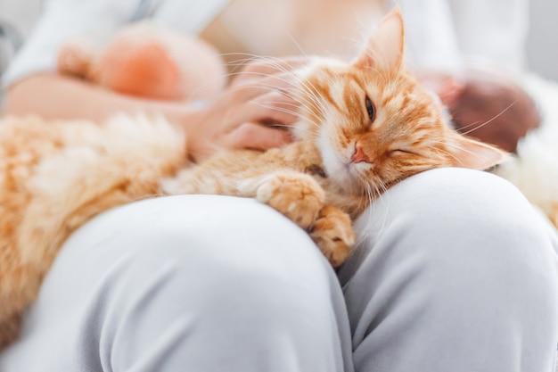 Femme caressant le mignon chat roux sur ses genoux.