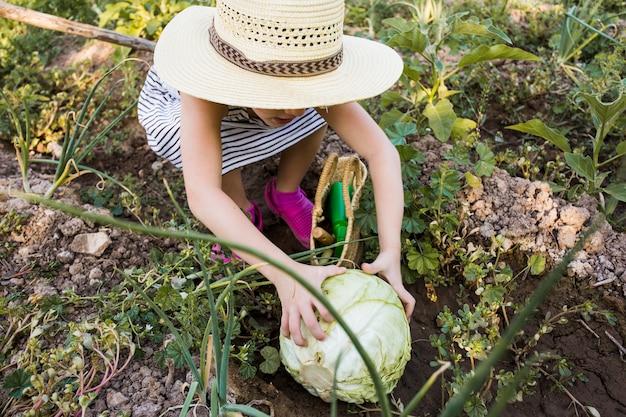 Femme, chapeau, récolte, chou, champ