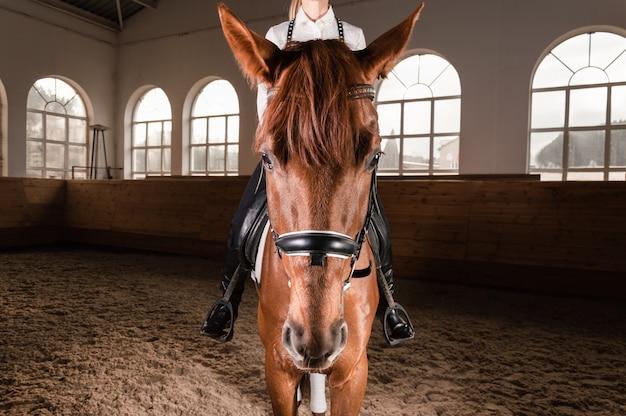 Femme chevauchant un cheval pur-sang.
