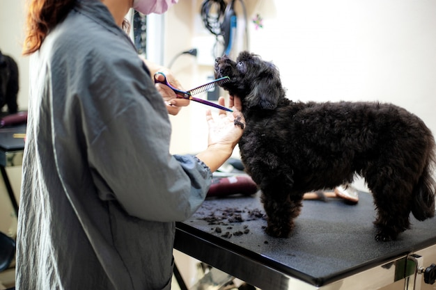 Femme coupe les cheveux d'un chien au mur.