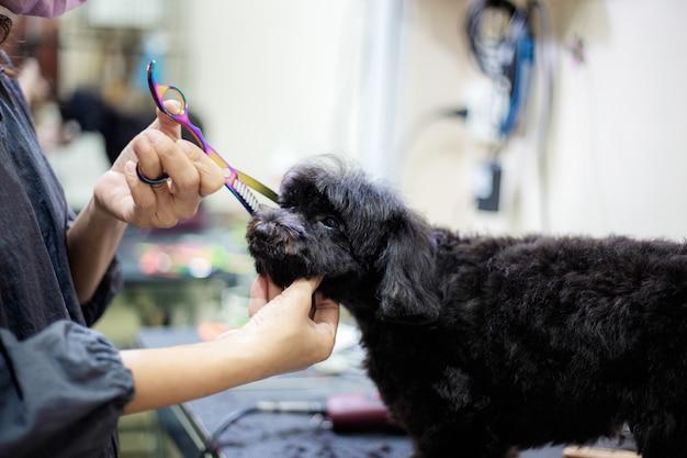 Femme coupe des cheveux chien.