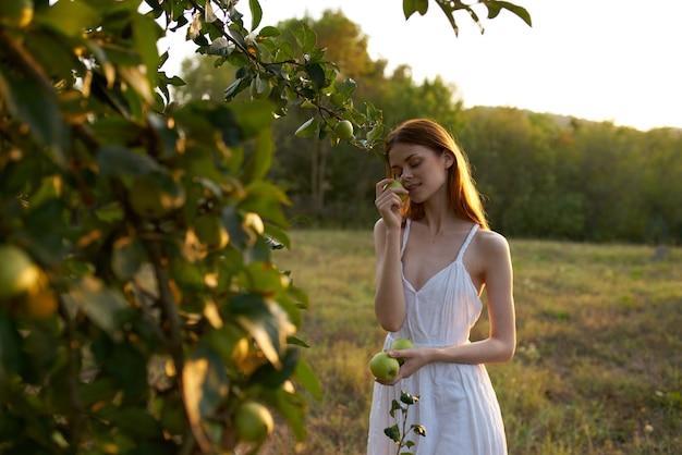 La femme cueille des pommes d'air frais de nature d'arbre