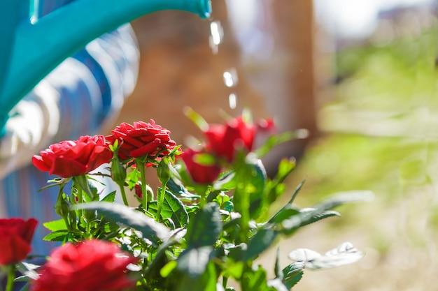 Femme dans le jardin avec des fleurs arrosant d'un arrosoir