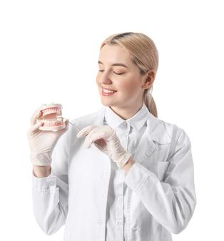 Femme dentiste avec modèle de mâchoire en plastique sur surface blanche