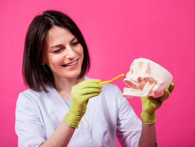 Femme dentiste se brosser les dents d'un crâne artificiel à l'aide d'une seule brosse à dents touffue