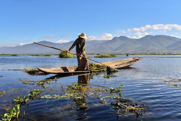 Une femme du myanmar, originaire d'inle, ramassant de l'herbe verte sur un bateau.