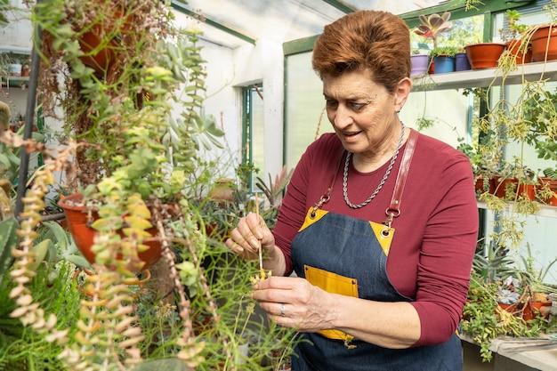 Femme examinant ses plantes succulentes