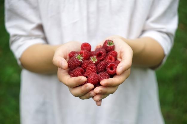 Une femme ou une fille tient des framboises fraîchement forestières dans les mains. été, soleil, concept de baies biologiques.