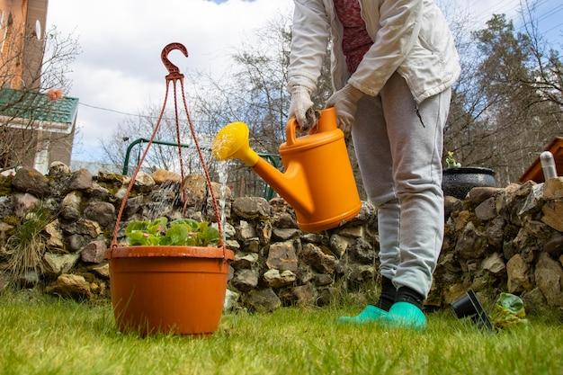 Femme jardinier arrose un pot de fleurs d'un arrosoir dans le jardin. pas de visage. mise au point sélective
