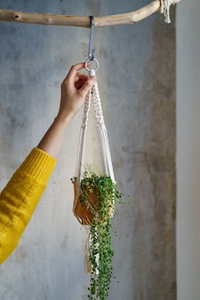 Femme jardinier holding cintre en macramé avec plante d'intérieur peperomia sur mur gris