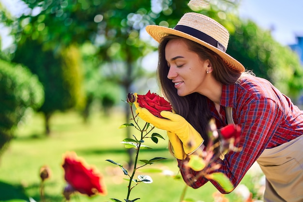 Femme jardinier sent et apprécie le parfum d'une fleur rose dans le jardin à la maison en journée ensoleillée