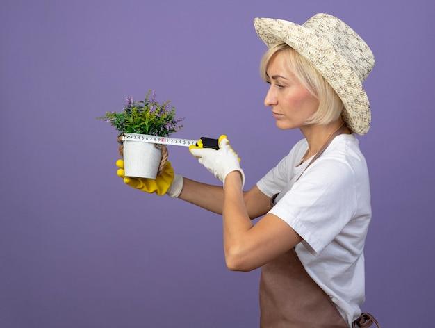 Femme jardinière blonde d'âge moyen concentrée en uniforme portant un chapeau et des gants de jardinage debout en vue de profil en regardant et en mesurant le pot de fleurs avec un mètre ruban