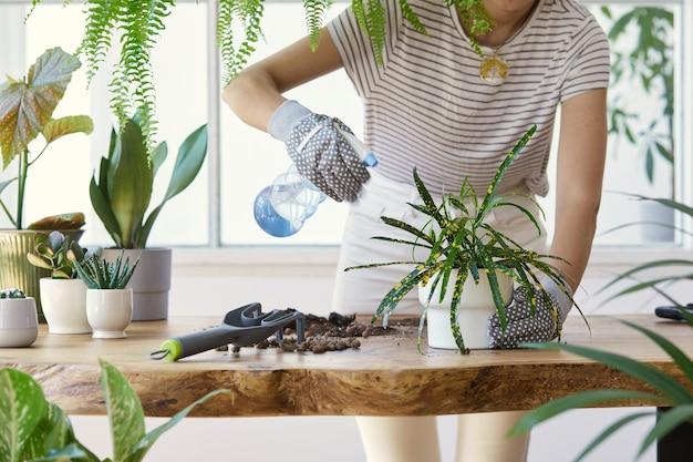 Femme jardiniers transplantant des plantes dans des pots en céramique sur la table en bois design. concept de jardin familial. temps de printemps. intérieur élégant avec beaucoup de plantes. prendre soin des plantes d'intérieur. modèle.