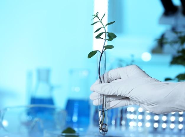 Femme main dans la main tenant un tube à essai avec plante
