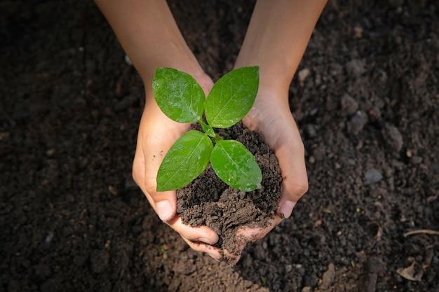 Femme main tenant un arbre. jour de la terre de l'environnement entre les mains des arbres qui poussent des plants