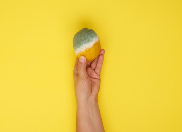 Femme main tenant jaune citron entier avec de la moisissure blanche