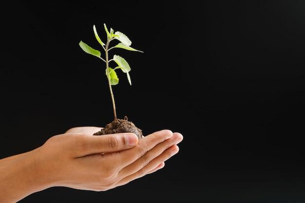 Femme main tenant une petite plante sur fond noir