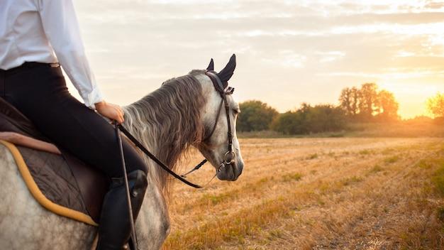 Femme montant un cheval gris dans un champ au coucher du soleil. équitation, location, beau fond, gîte. amitié et amour des gens et des animaux. animal de compagnie. espace de copie de sport équestre