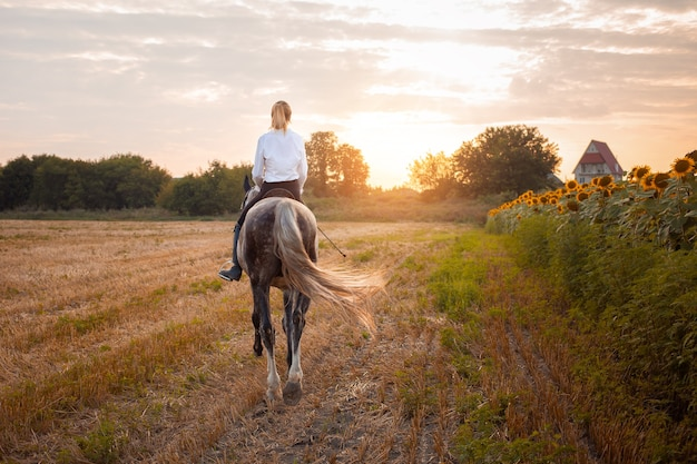 Femme montant un cheval gris dans un champ au coucher du soleil. équitation, location, beau fond, gîte. amitié et amour des gens et des animaux. animal de compagnie. sport équestre. vue arrière