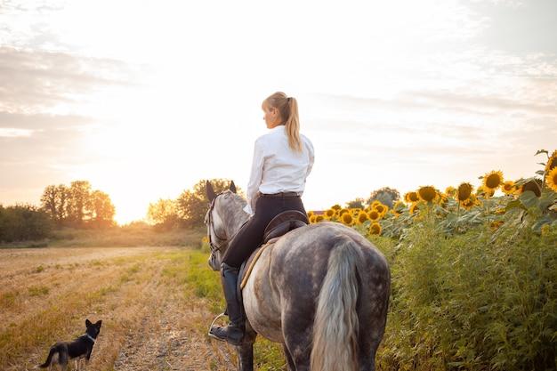 Une femme monte un cheval gris dans un champ au coucher du soleil. liberté, beau fond, amitié et amour pour l'animal. entraînement sportif équestre, location et vente de chevaux, randonnées, équitation, promenades. chien