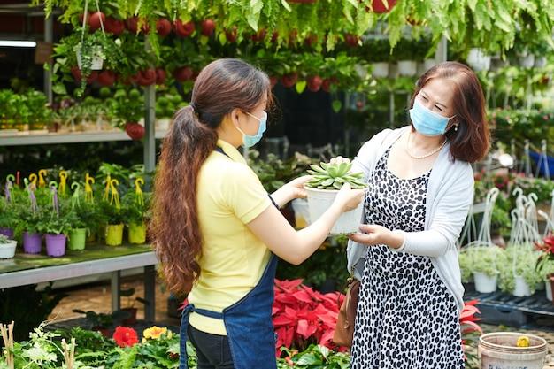 Femme mûre achetant le pot de grande fleur succulente au marché d'usine