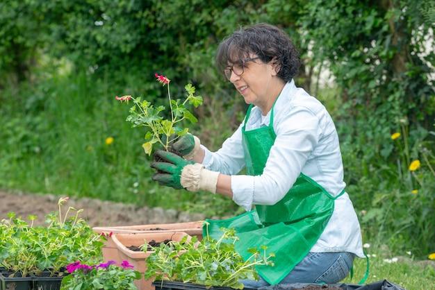 Femme mûre empotage de fleurs de géranium