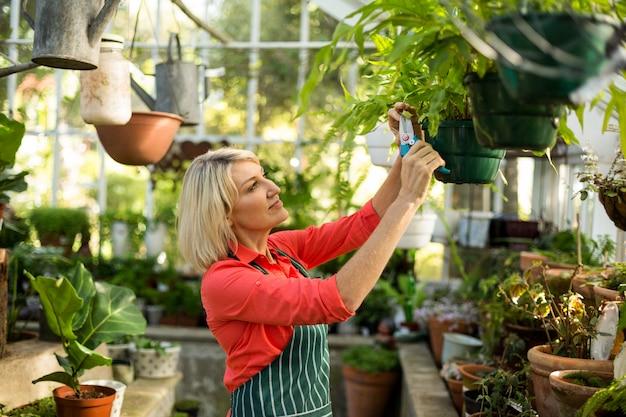Femme mûre inspectant les plantes en pot à effet de serre