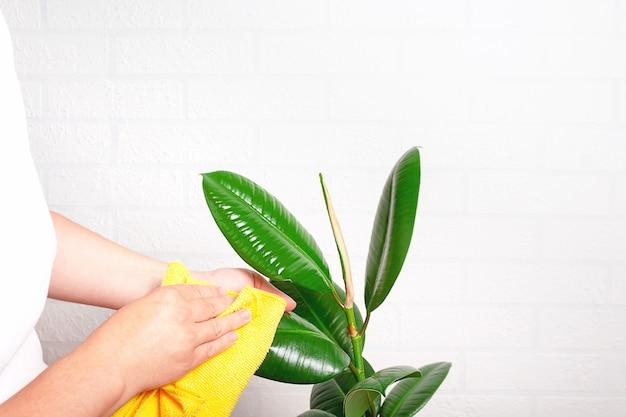 Femme nettoyant la poussière de l'usine avec un chiffon