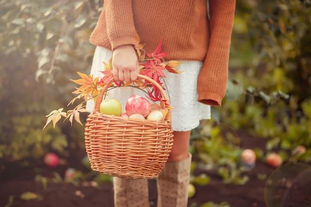 Femme avec panier rempli de pommes mûres dans un jardin