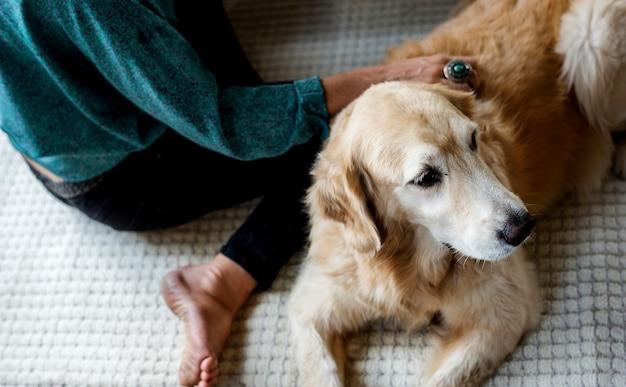 Femme petting goldent retriever chien