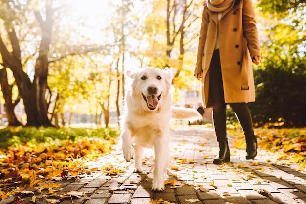 Femme à pied avec son chien golden retriever en automne parc ensoleillé