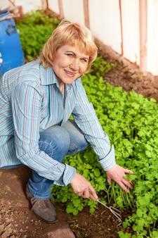 Femme plantant des semis. la femme d'âge moyen dans le jardin est heureuse, le soleil brille.