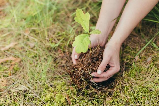 Une femme plante un petit chêne dans la forêt, un volontaire aide à planter de nouveaux arbres dans la forêt, photo en gros plan