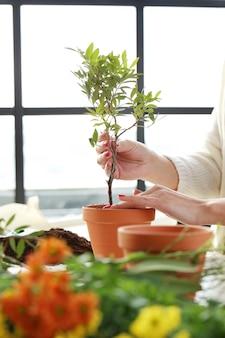 Femme, planter, petit, arbre, intérieur, maison
