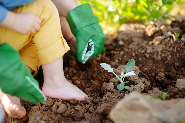 Femme, planter des semis au lit dans le jardin à la journée ensoleillée d'été