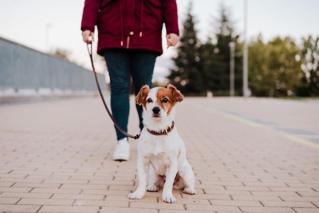 Femme en plein air avec chien jack russell