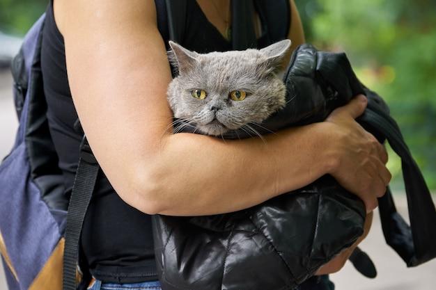 Femme porte dans un sac noir un chat british shorthair malade à la clinique vétérinaire. le chat souffre d'un nez qui coule