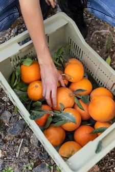 Femme prenant une orange dans une boîte