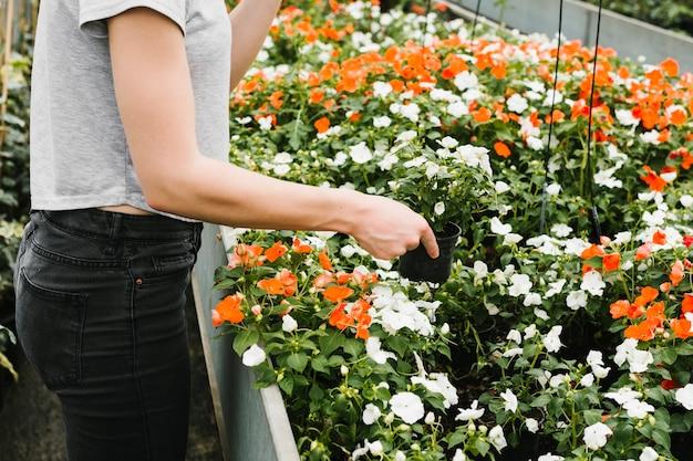 Femme prenant une plante