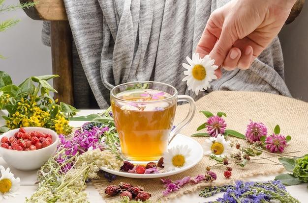 Une femme prépare une tisane à la camomille. cérémonie du thé. thé à la rose sauvage et au trèfle