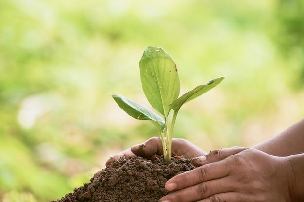 Femme protégeant les jeunes semis verts dans le sol contre un arrière-plan flou