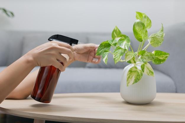Femme pulvérise de l'engrais liquide à la plante sur la table en bois dans le salon