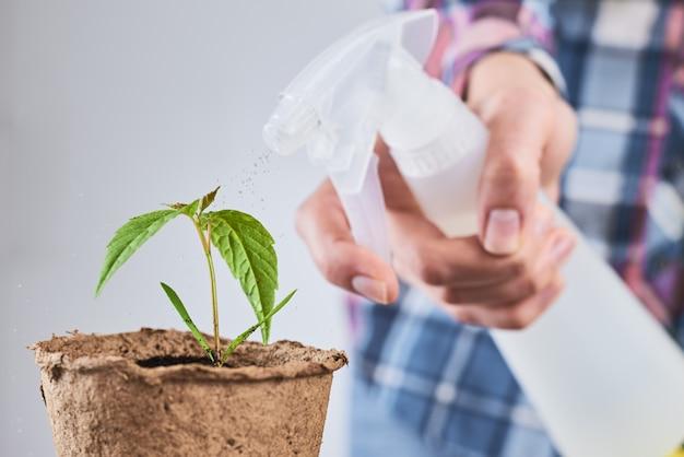 Femme pulvériser de l'eau sur la plante