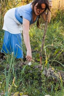 Femme récoltant des oignons de printemps frais dans le champ