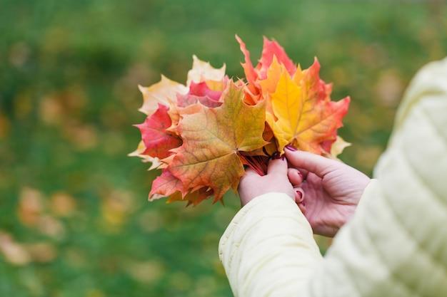 Femme recueille les feuilles d'érable d'automne dans le parc