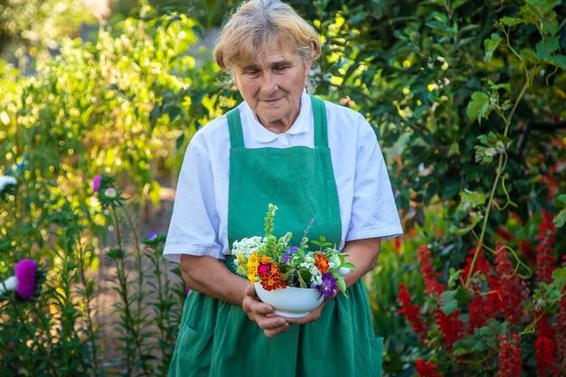 La femme recueille des herbes médicinales et des fleurs. mise au point sélective.